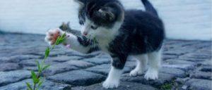 Katze Symbolbild
