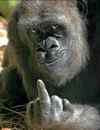 2020-12-21 Webseite zeigt nur einen Affen